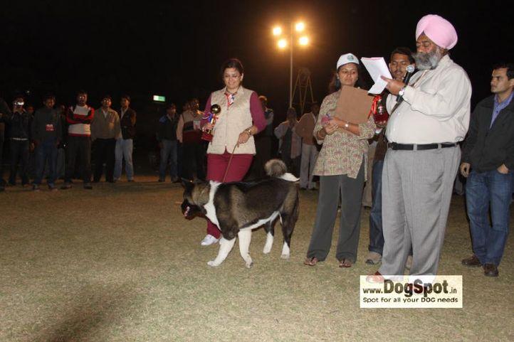 Akita,Lineup,, Jaipur 2010, DogSpot.in