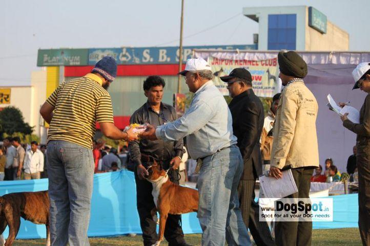 boxer,, Jaipur 2010, DogSpot.in