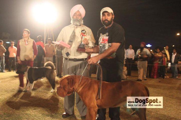 Dogue De Bordeaux,Lineup,mastiff,, Jaipur 2010, DogSpot.in