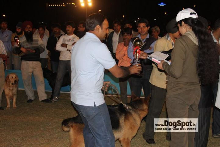 GSD,Lineup,, Jaipur 2010, DogSpot.in