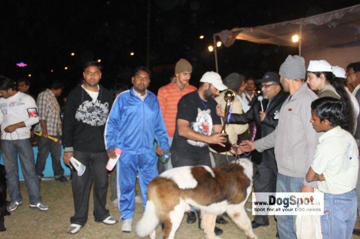 Lineup,St Bernard,, Jaipur 2010, DogSpot.in
