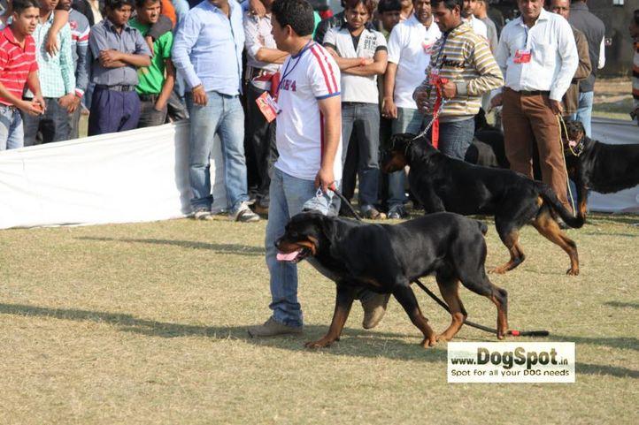 Rott,, Jaipur 2010, DogSpot.in