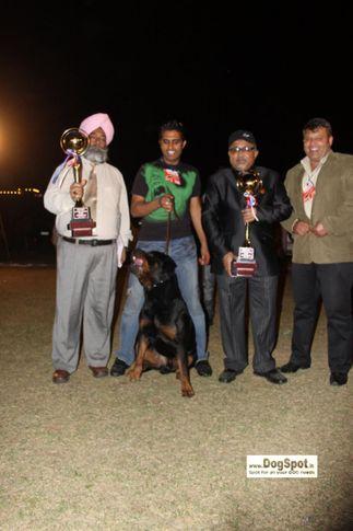Rott, Sunny, Jaipur 2010, DogSpot.in