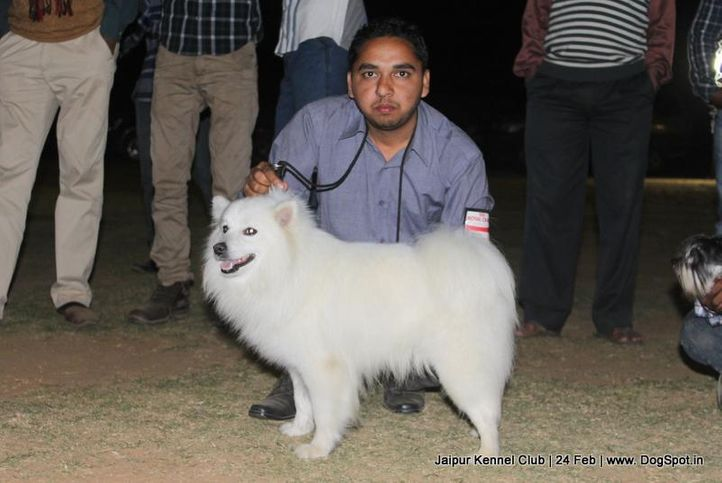 ex-14,spitz-indian,sw-84,, WHITER, Greater Indian Spitz, DogSpot.in