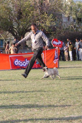 pug,sw-34, Jaipur Kennel Club, DogSpot.in