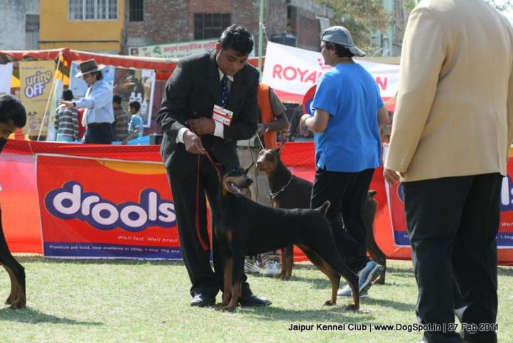 doberman,ex-145,sw-34, JASPAR'S FROM THIS MOMENT, Doberman Pinscher, DogSpot.in