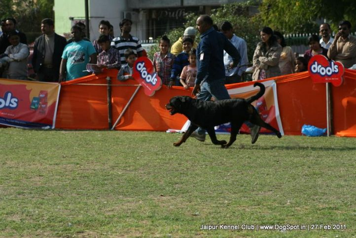 ex-183,rottweiler,sw-34, BRUNO, Rottweiler, DogSpot.in