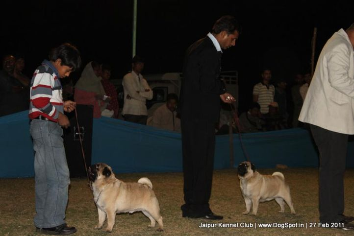 ex-37,ex-39,lineup,sw-34, CH. Joy Of Sunnyland, Pug, DogSpot.in