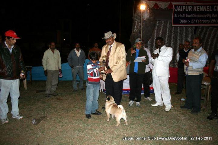 ex-37,lineup,sw-34, CH. Blazing Boy of Sunnyland, Pug, DogSpot.in