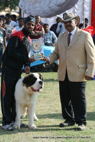 ex-267,st bernard,sw-34, Jaipur Kennel Club, DogSpot.in