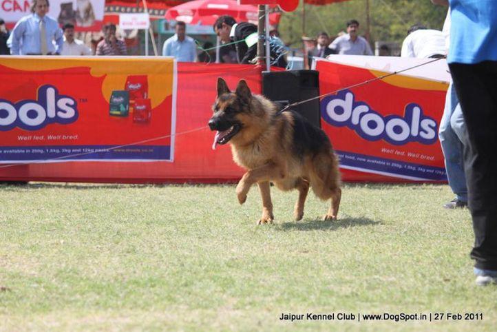 ex-233,gsd,sw-34, VEGAS VONDER GRAFENBURG, German Shepherd Dog, DogSpot.in