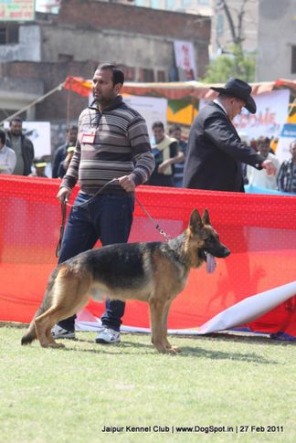 ex-237,gsd,sw-34, ROCKY VOM PATTI, German Shepherd Dog, DogSpot.in