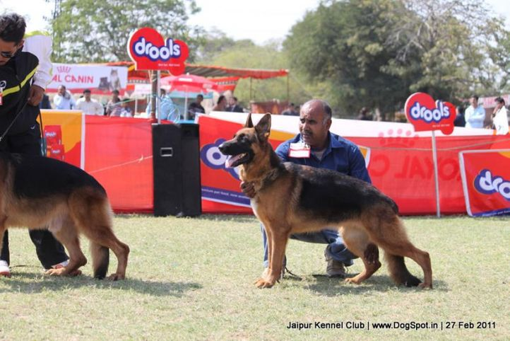 gsd,sw-34, Jaipur Kennel Club, DogSpot.in