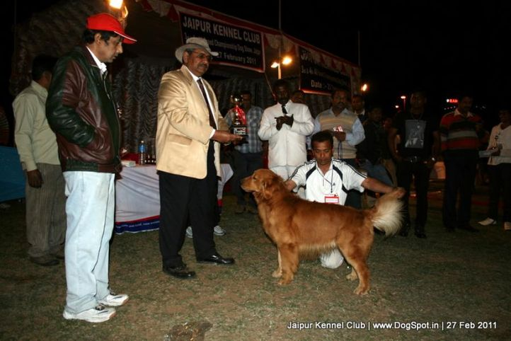 ex-271,lineup,sw-34, Jaipur Kennel Club, DogSpot.in