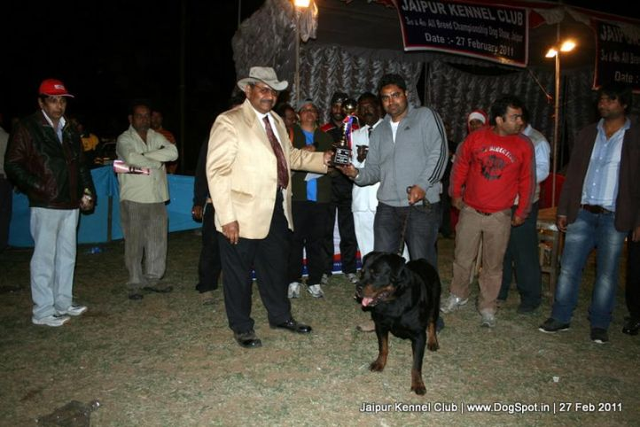 lineup,sw-34, Jaipur Kennel Club, DogSpot.in