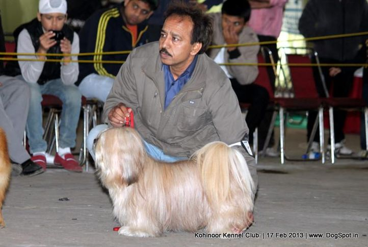 ex-38,lhasa-apso,sw-82,, DHOOMI, Lhasa Apso, DogSpot.in