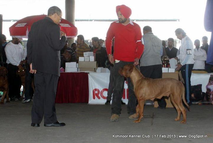 dogue de bordeaux,ex-114,sw-82,, CHINNY, Dogue De Bordeaux, DogSpot.in
