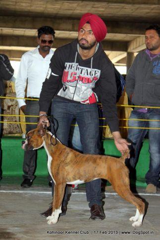 boxer,sw-82,, Jalandhar Show 2013, DogSpot.in