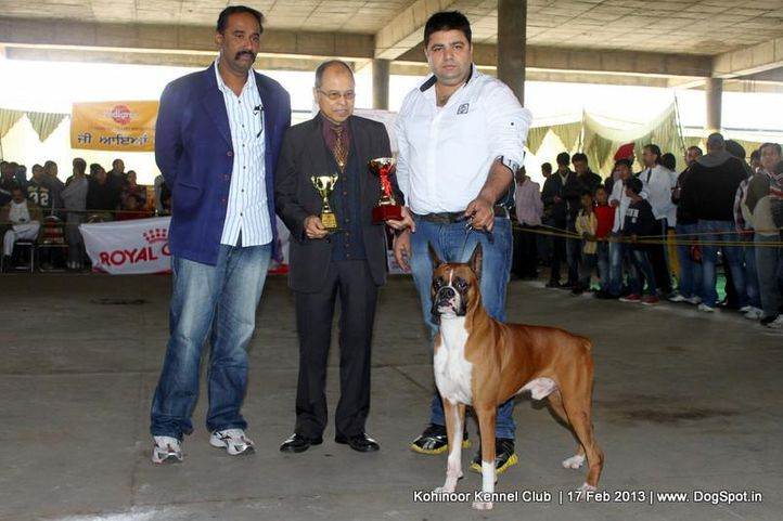 boxer,ex-101,sw-82,, NEXT STEP'S TRIUMPH, Boxer, DogSpot.in