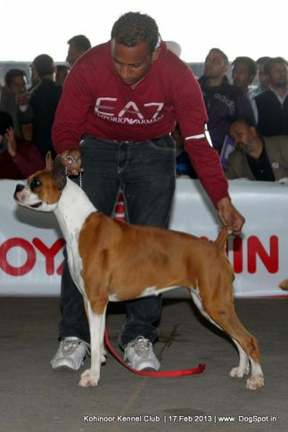 boxer,ex-93,sw-82,, NEXT STEPS BETSY ROSS, Boxer, DogSpot.in