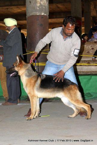 ex-191,german shepherd,sw-82,, JACKSON, German Shepherd Dog, DogSpot.in