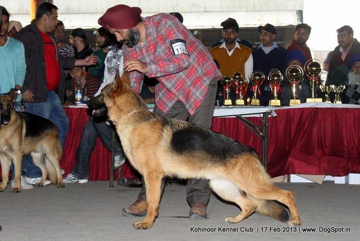 ex-194,german shepherd,sw-82,, XAVER VOM TEAM FIEMERECK, German Shepherd Dog, DogSpot.in