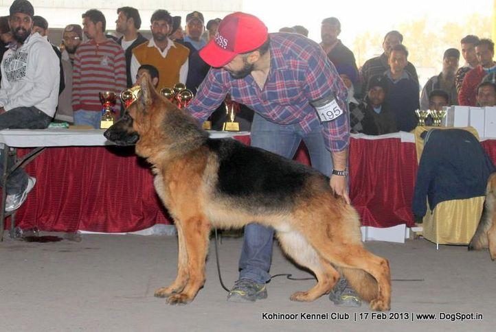 ex-195,german shepherd,sw-82,, VICTOR VOM ZELLWALDRAND, German Shepherd Dog, DogSpot.in