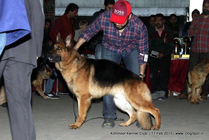 ex-197,german shepherd,sw-82,, WILLI AM SEETEICH, German Shepherd Dog, DogSpot.in
