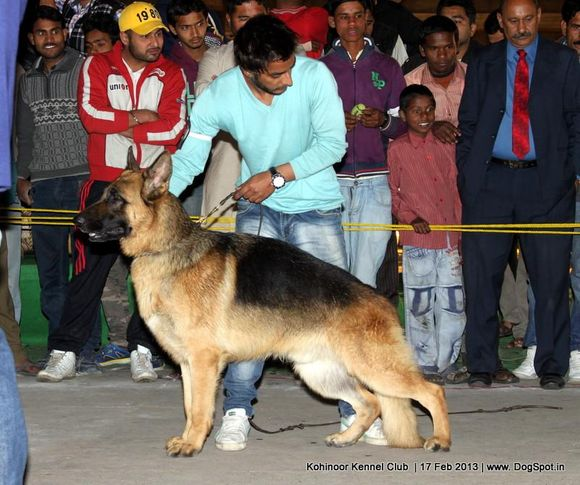 ex-198,german shepherd,sw-82,, PHOOL, German Shepherd Dog, DogSpot.in
