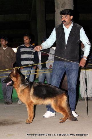 ex-204,german shepherd,sw-82,, ASHA'S JERRY, German Shepherd Dog, DogSpot.in