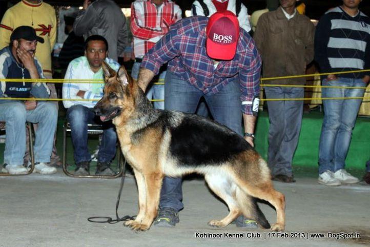 ex-205,german shepherd,sw-82,, JAYLO VOM FERROUS, German Shepherd Dog, DogSpot.in