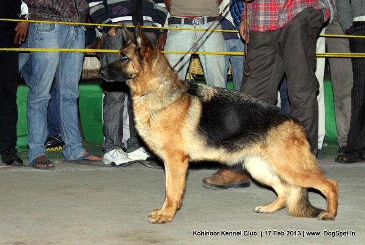 ex-208,german shepherd,sw-82,, WINNOA VOM TEAMERECK, German Shepherd Dog, DogSpot.in