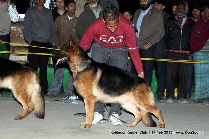 ex-210,german shepherd,sw-82,, ALIX VON HAUS SHERGILL, German Shepherd Dog, DogSpot.in