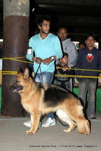 ex-211,german shepherd,sw-82,, FAMI OF DADHWAL, German Shepherd Dog, DogSpot.in