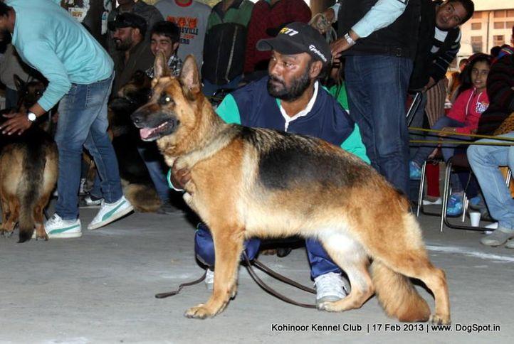 german shepherd,sw-82,, Jalandhar Show 2013, DogSpot.in