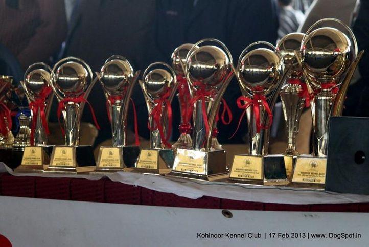 show trophy,sw-82,, Jalandhar Show 2013, DogSpot.in