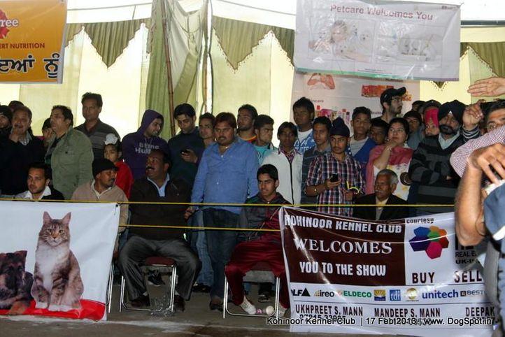 people,sw-82,, Jalandhar Show 2013, DogSpot.in