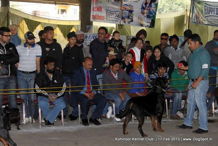 people,sw-82,, Jalandhar Show 2013, DogSpot.in