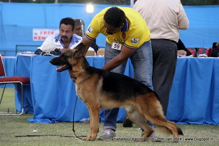 ex-59,german shepherd,sw-114,, Jamshedpur Dog Show 2014, DogSpot.in