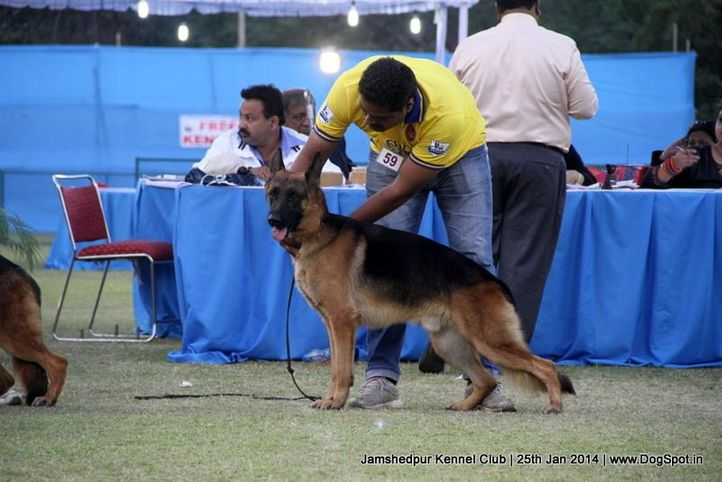 ex-59,german shepherd,sw-114,, Jamshedpur Dog Show 2014, DogSpot.in