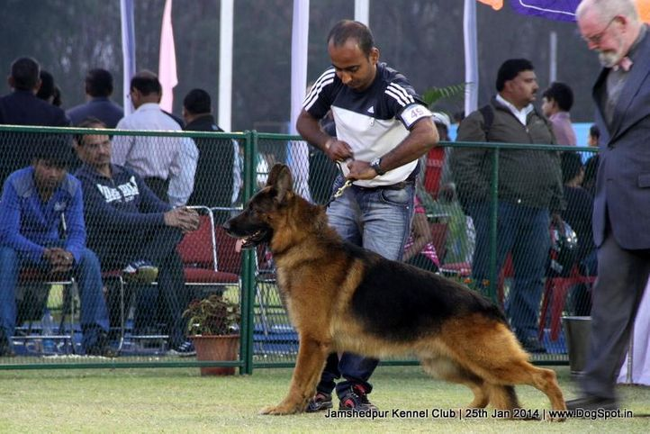 ex-49,german shepherd,sw-114,, Jamshedpur Dog Show 2014, DogSpot.in