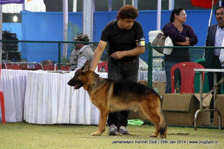 german shepherd,sw-114,, Jamshedpur Dog Show 2014, DogSpot.in