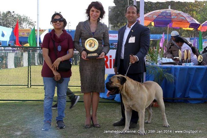bull mastiff,ex-162,sw-114,, Jamshedpur Dog Show 2014, DogSpot.in