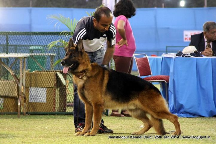 ex-49,german shepherd,sw-114,, Jamshedpur Dog Show 2014, DogSpot.in