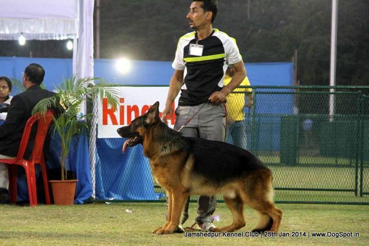 german shepherd,sw-114,, Jamshedpur Dog Show 2014, DogSpot.in