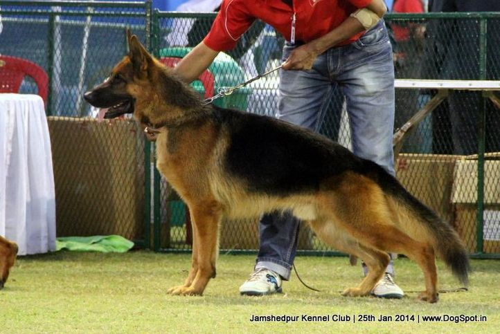 ex-26,german shepherd,sw-114,, Jamshedpur Dog Show 2014, DogSpot.in