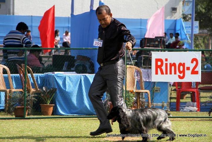 cocker spaniel,ex-355,sw-114,, Jamshedpur Dog Show 2014, DogSpot.in