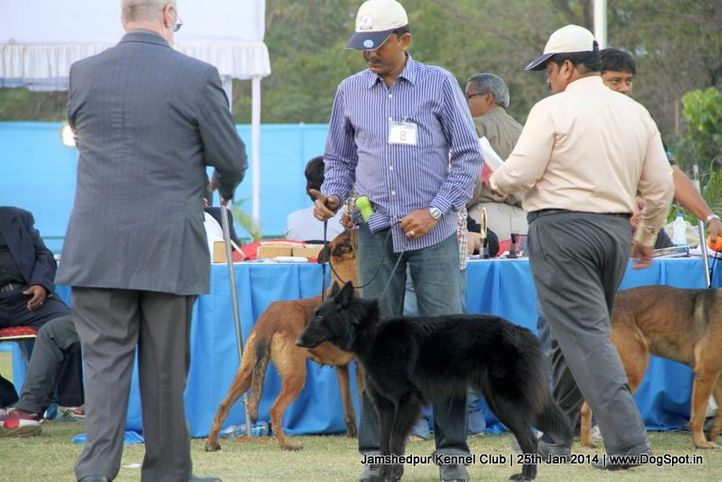 belgian shepherd,ex-8,sw-114,, Jamshedpur Dog Show 2014, DogSpot.in