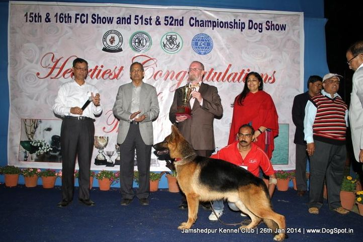 ex-26,german shepherd,line up,rbi,sw-114,, Jamshedpur Dog Show 2014, DogSpot.in