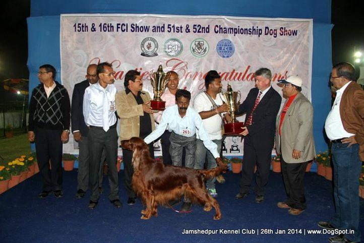 ex-263,irish setter,line up,sw-114,, Jamshedpur Dog Show 2014, DogSpot.in